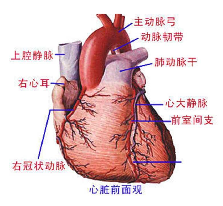 先天性心脏病有哪些症状?